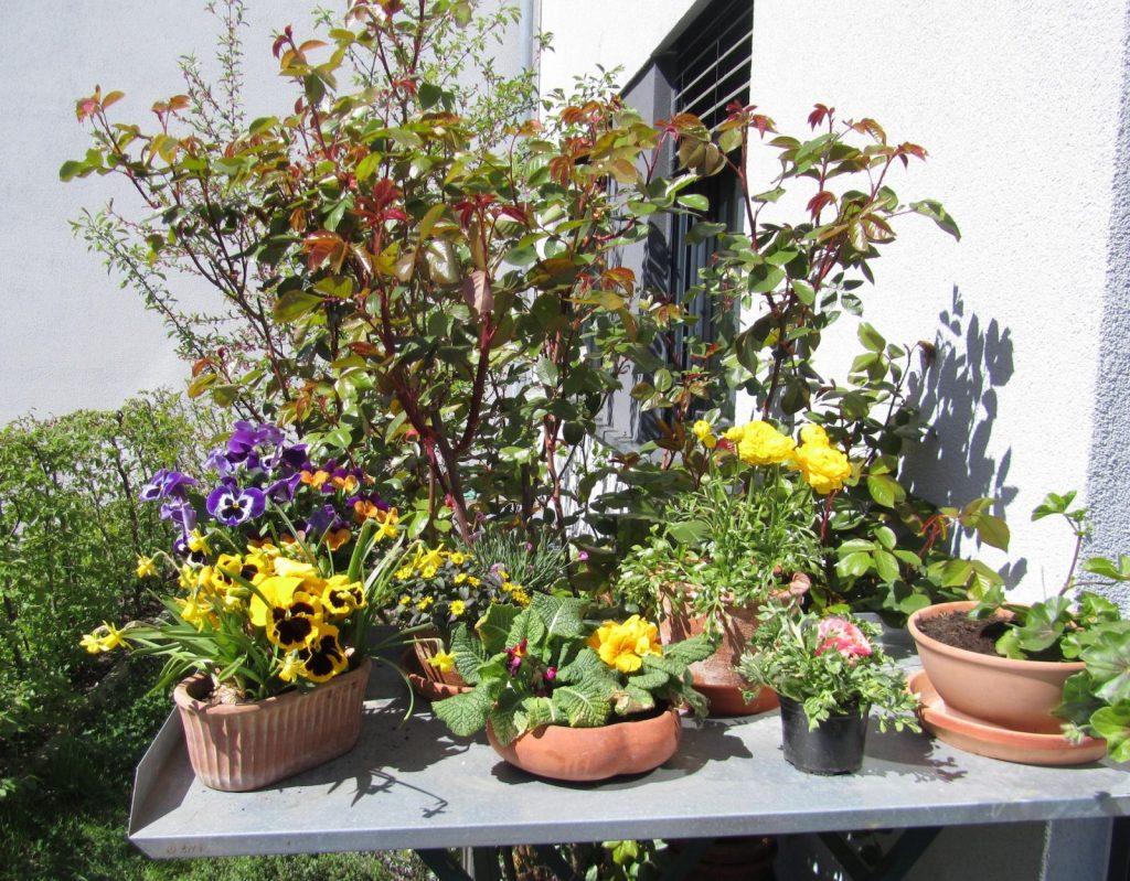 Blumen – Gestalttherapie und Körpertherapie in Berlin-Schöneberg